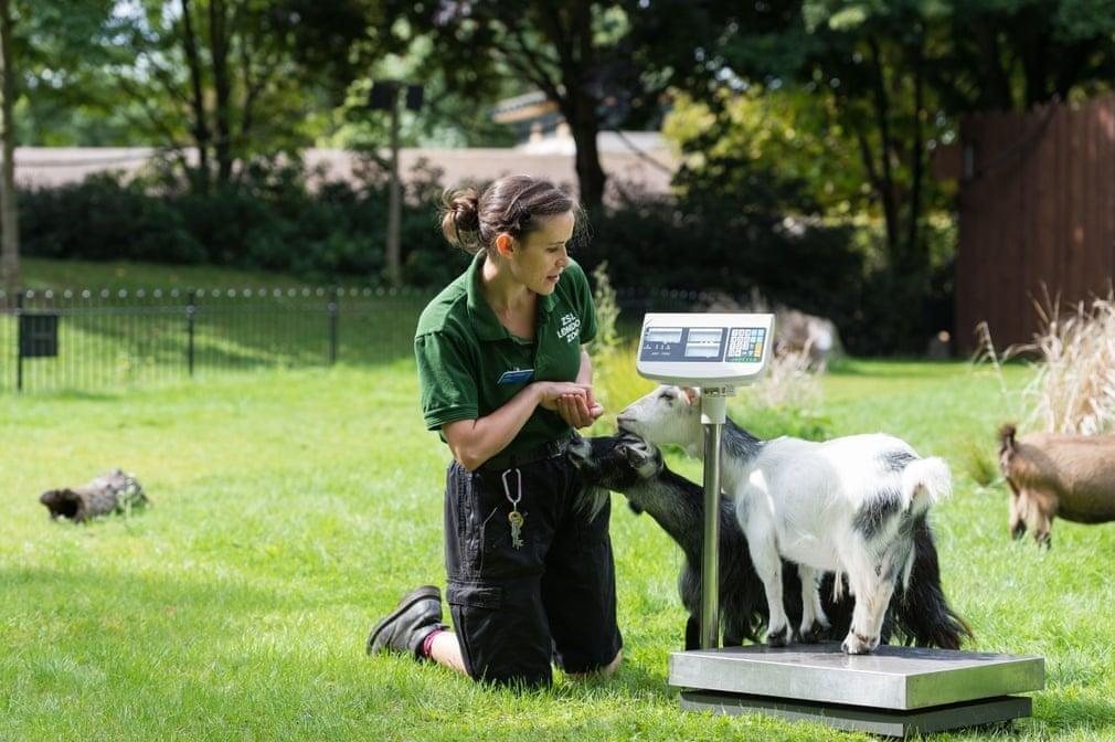 12 хитростей, которые используют работники зоопарков для взвешивания животных