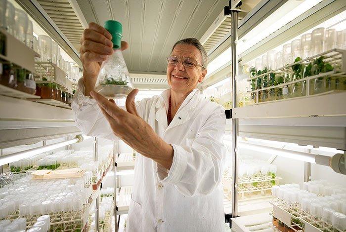 Благодаря белкам ученые вырастили растение из 32-тысячелетних семян