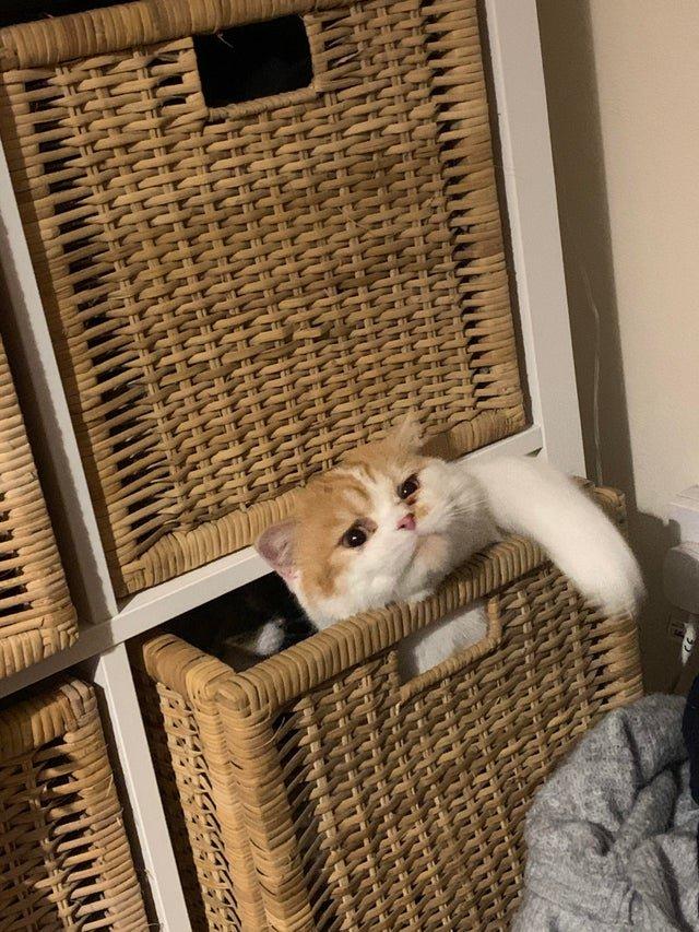 12 милых котов со своими усатыми причудами