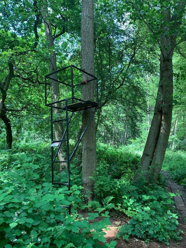 12 находок, которые люди обнаружили во время прогулки в лесу