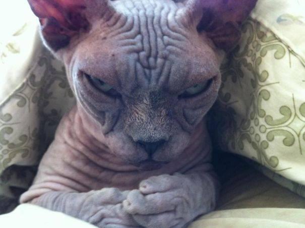 Дюжина фото, подтверждающих, что коты из потустороннего мира