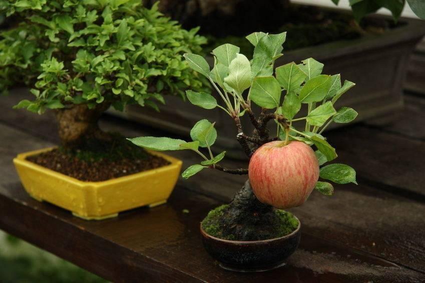 Природа способна впечатлять даже деревьями: 12 кадров