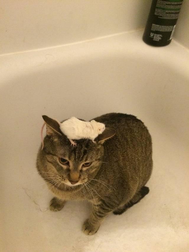 12 котов, у которых сломался инстинкт охотника