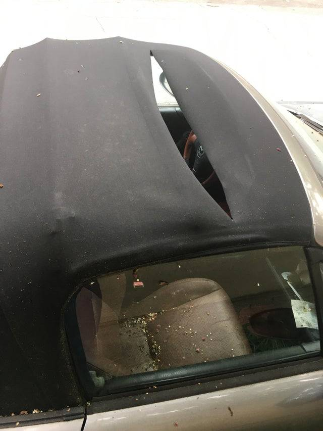 Какие только казусы не случаются с владельцами авто: 13 фото