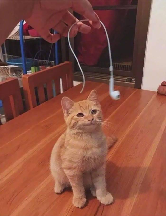 14 фото о том, как коты испытывают наше терпение, но мы их все равно любим