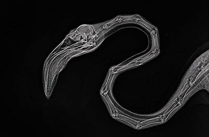 13 рентгеновских снимков, которые раскрывают секреты
