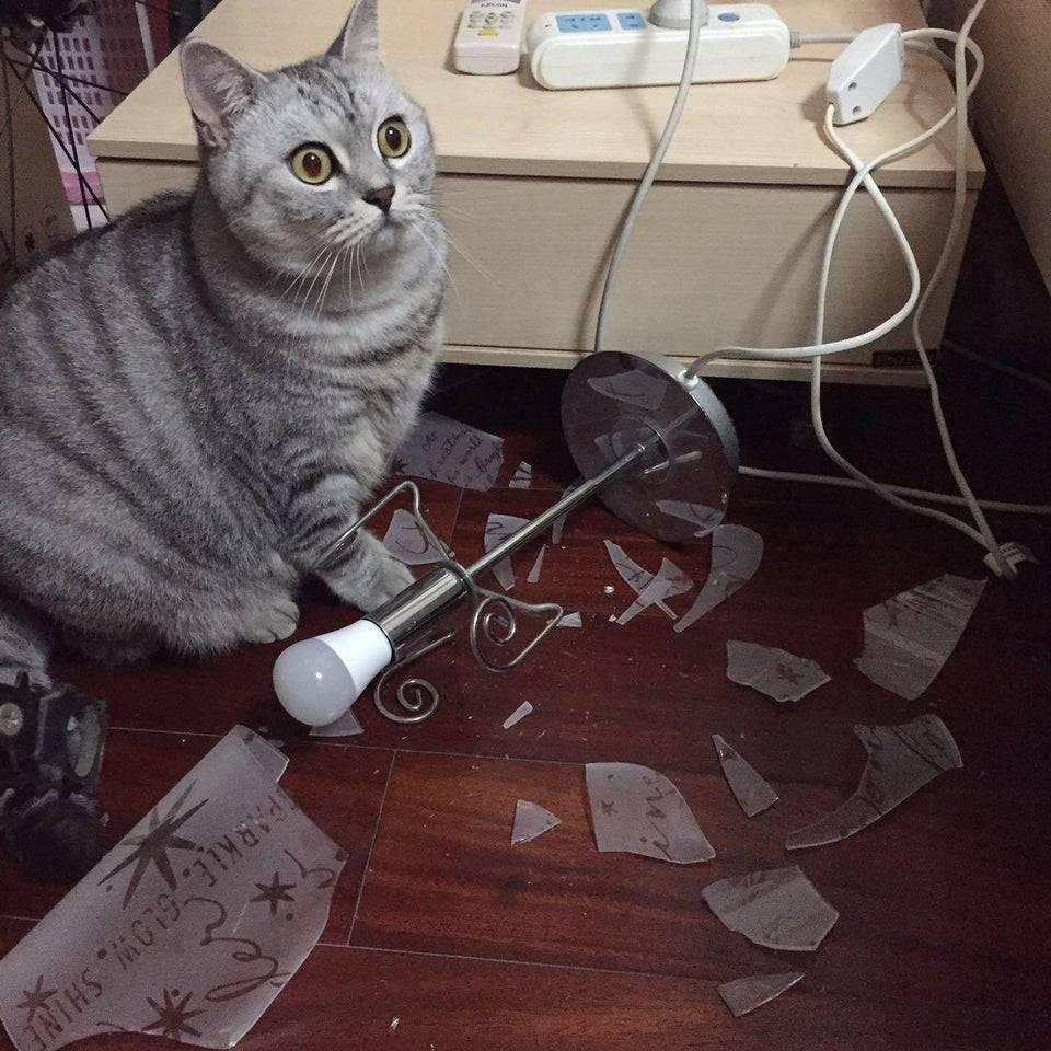 14 котов, которые не могут прожить, чтобы не напакостить