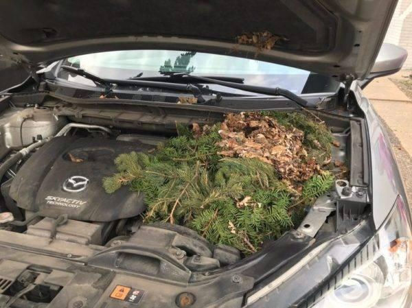12 неожиданных живых находок в автомобилях